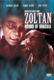 Zoltan - Draculas Bluthund