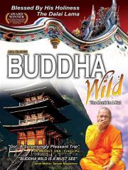 Buddha Wild - Monk in a Hut