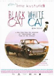 Schwarze Katze, weisser Kater