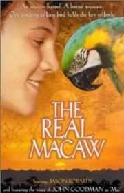 MacCool und der Piratenschatz