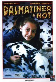 Dalmatiner in Not