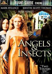 Engel und Insekten
