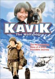 Kavik, der Schlittenhund