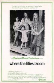 Wo die Lilien blühen