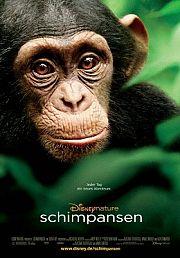 Alle Infos zu Schimpansen