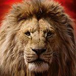 """Disney zieht durch: Zuwachs bei """"Der König der Löwen"""" und """"Dumbo"""""""