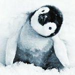 Die Reise der Pinguine 2 - Der Weg des Lebens Kritik