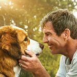 """Gut gebellt: Putzige Poster zu """"Bailey - Ein Hund kehrt zurück"""""""