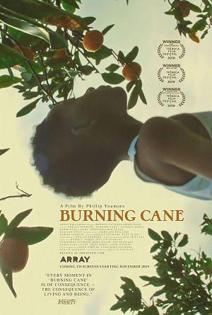 Burning Cane Film-News