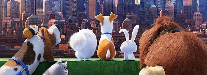 """Flauschiger """"Pets""""-Teaser - """"Shrek""""-Besuch bei """"Kung Fu Panda 3"""""""