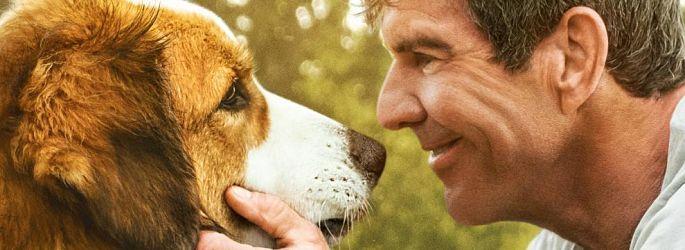 """Gut gebellt: Teaser & Poster zu """"Bailey - Ein Hund kehrt zurück"""""""