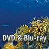 Neue Veröffentlichungen auf DVD und Blu-ray - Spannung, Dokus, Abenteuer