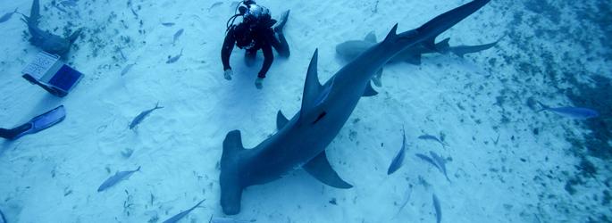 """""""Hai Life"""": August-Sonderprogramm bei National Geographic WILD"""