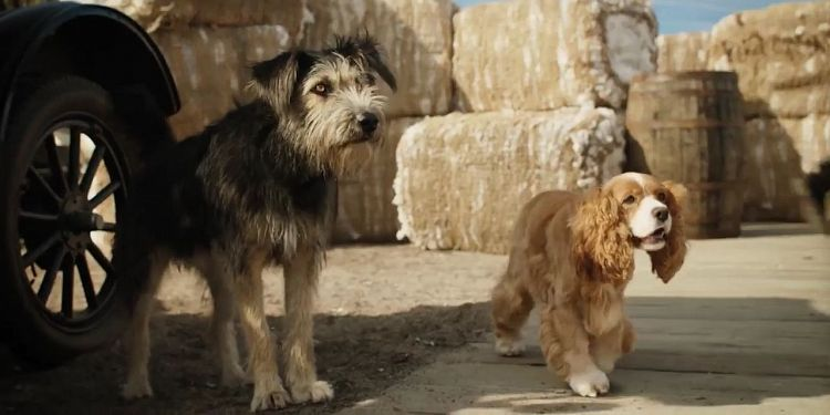 Susi und Strolch Realfilm Trailer