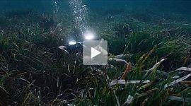 Jacques - Entdecker der Ozeane Trailer