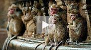Im Reich der Affen Trailer