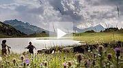 Heidi Trailer
