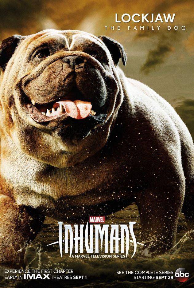Galerie von Marvels Inhumans