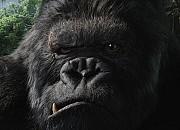 """Filmgalerie zu """"King Kong"""""""