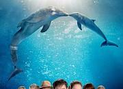 Bild zu Mein Freund, der Delfin 2