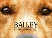 """Filmgalerie zu """"Bailey - Ein Freund fürs Leben"""""""