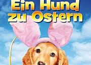 """Filmgalerie zu """"Ein Hund zu Ostern - Ein turbulentes Osterfest"""""""