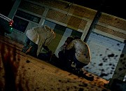 "Filmgalerie zu ""Pandemic - Fear the Dead"""